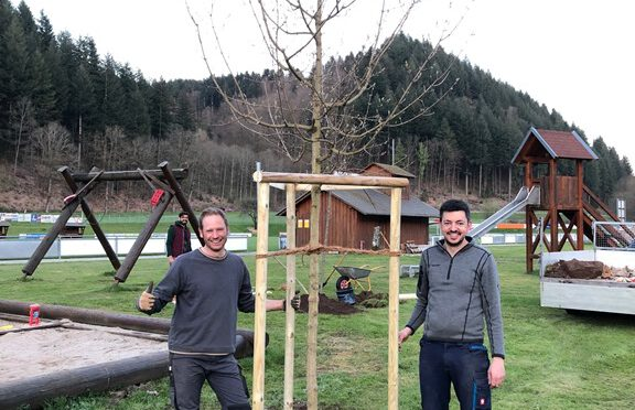 Neue Bäume ersetzen alte Bäume am Spielplatz